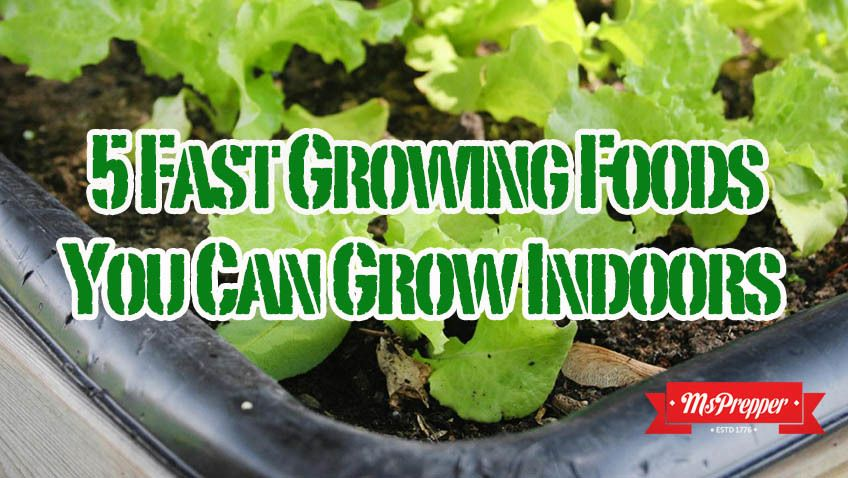 5 Fast Growing Foods You Can Grow Indoors Growing 400 x 300