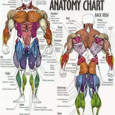 This Course Outlines Most Things When It Comes To General Anatomy