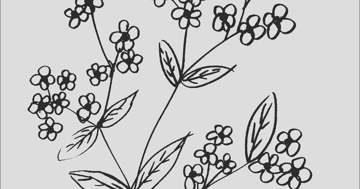 Fantastis 30 Gambar Bunga Yang Gampang Digambar Kumpulan Contoh Gambar Bunga Yang Mudah Digambar Disertai Download 15 Cara M Di 2020 Bunga Bunga Sakura Bunga Ungu