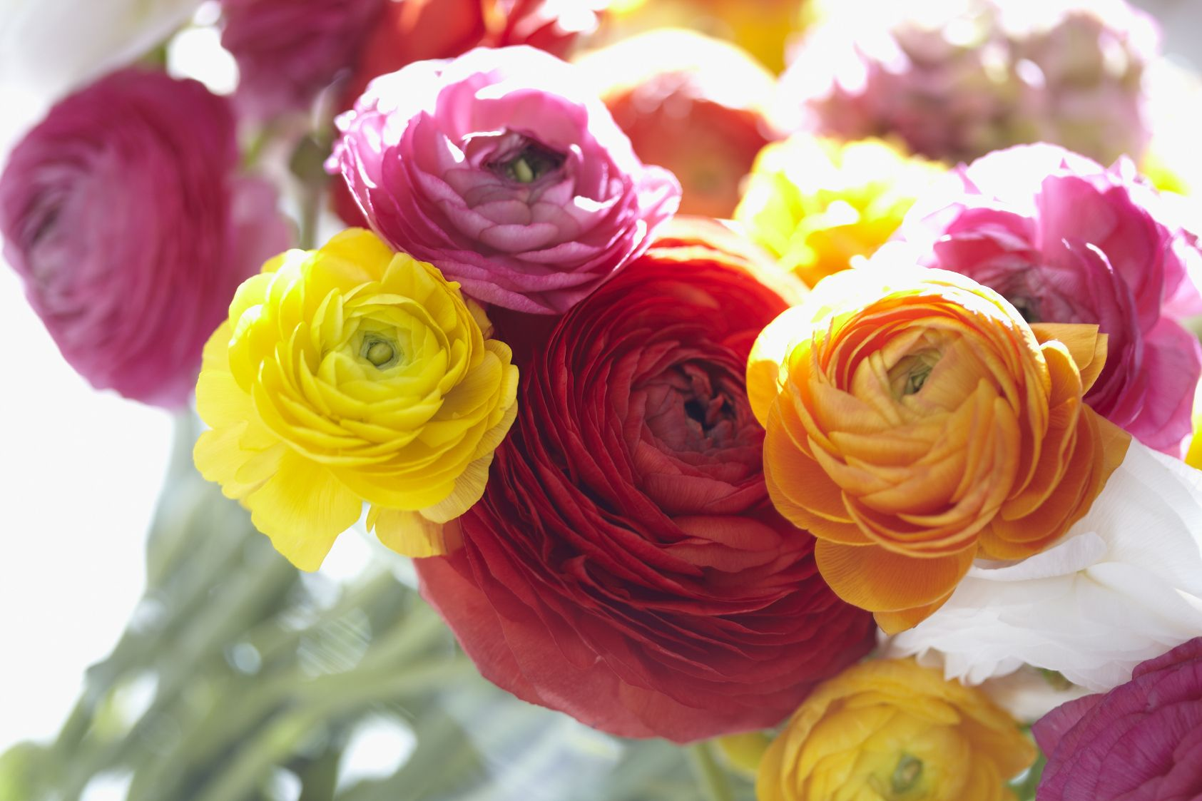 April showers bring May flowers!   Beautiful flowers