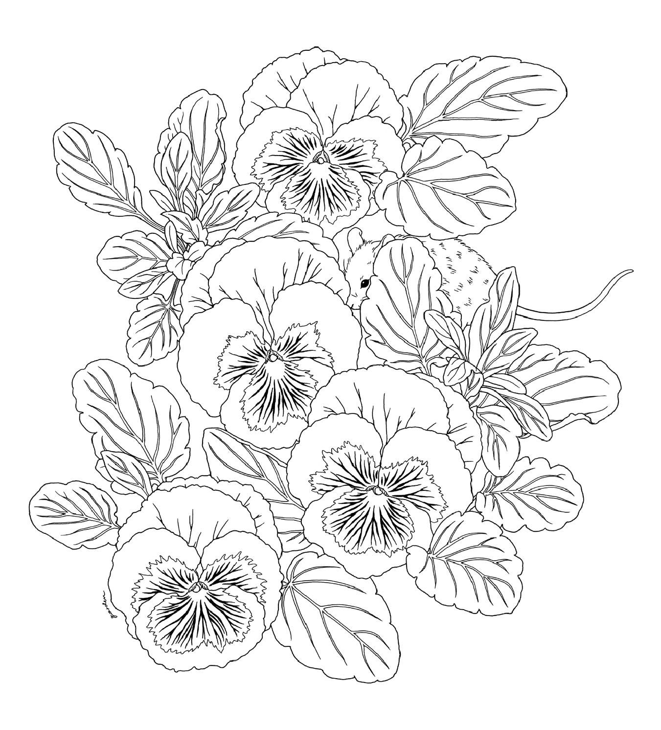 Harmony Of Nature Coloring Pages To Print