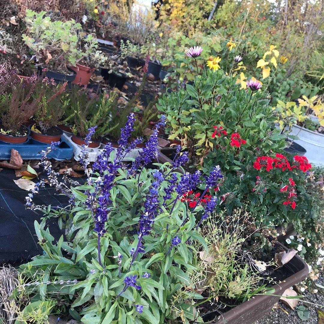 Etwas Sommer Fur Eure Herzen Im Bereich Der Ausbildung Gartenbau Und Agrarwirtschaft Hab Ich Den Letzten Rest Vom Somm Garten Design Gartenbau Garten