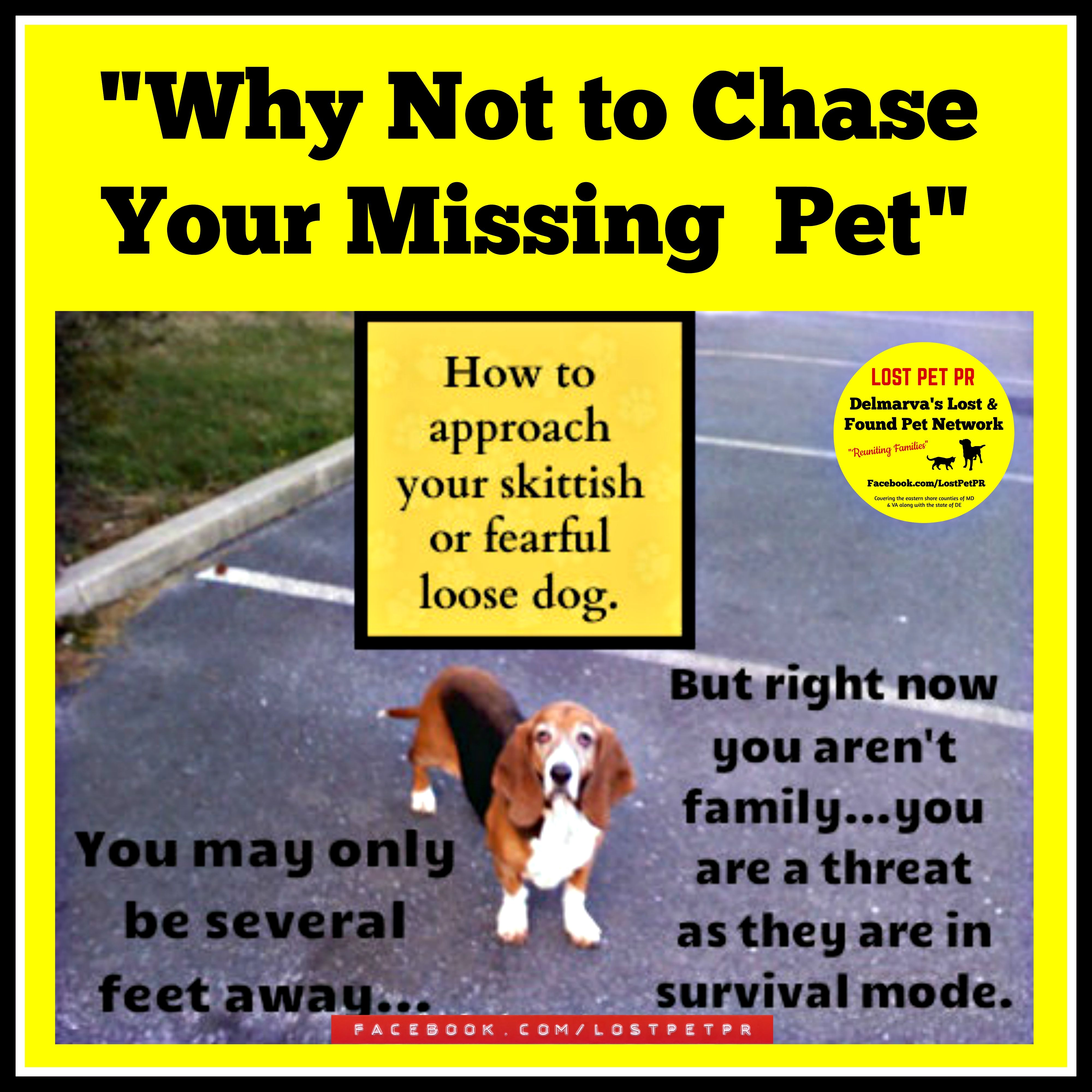 Anyone Trying To Catch A Skittish Or Fearful Dog Should Read This When Your Dog Is Loose Not Just A Newly Adopted Pet But Any Losing A Pet Losing A