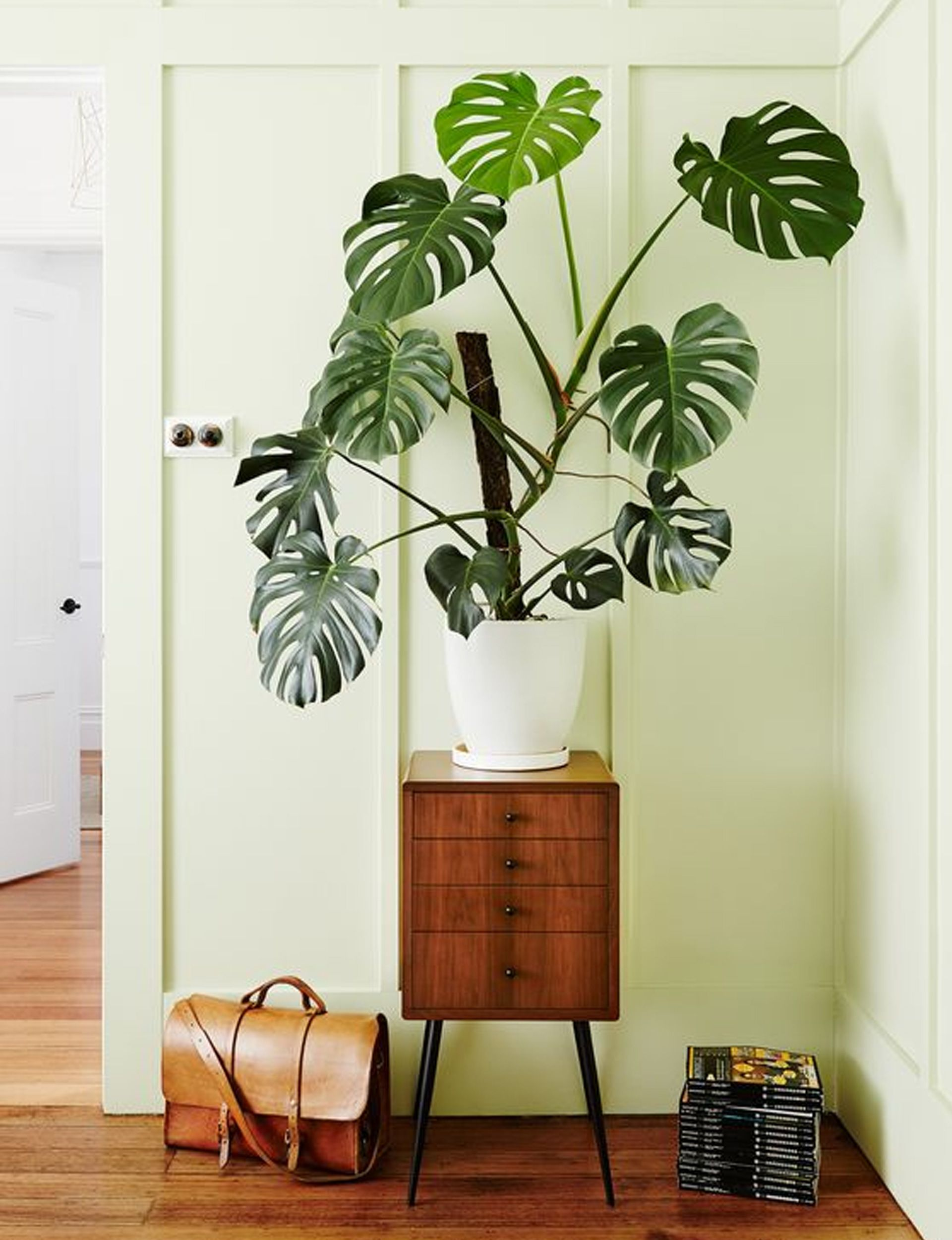 Why indoor trees are the house plant trend to embrace in 2019 -   10 plants Indoor leaves ideas