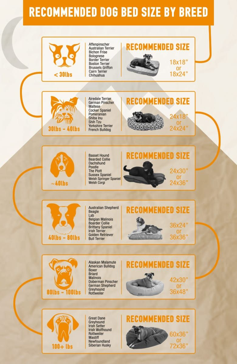 What To Consider When Picking Out A Dog Bed Sierra Blog Dog Bed Dog Bed Sizes Cool Dog Beds