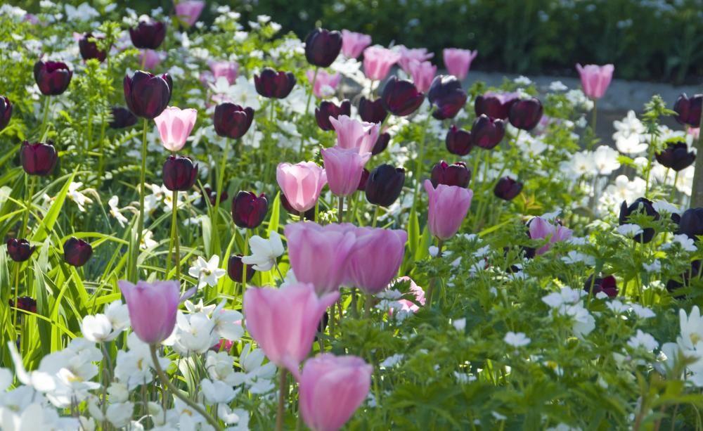 blumenzwiebeln im herbst den fr hling pflanzen gartentipps pinterest garten pflanzen und. Black Bedroom Furniture Sets. Home Design Ideas