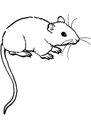 Ausmalbild Maus 6 Zum Ausmalen Ausmalbilder Ausmalbildermause Malvorlagen Ausmalen Schule Lowen Malvorlagen Lustige Malvorlagen Ausmalbilder