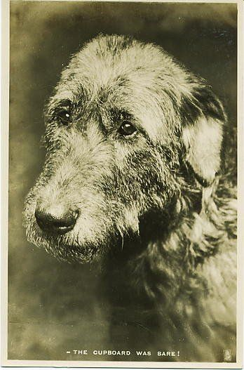 http://www.irishwolfhounds.org/history.htm