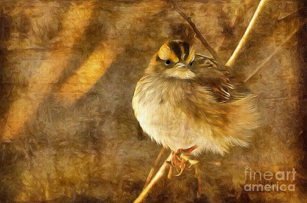 Sparrow Print featuring the photograph White Throated Sparrow by Lois Bryan