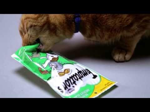 Pin On Temptations Cats Treats Diy