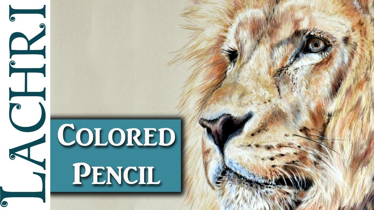 Color art colored pencils - Color Art Drawing A Lion In Colored Pencil W Lachri