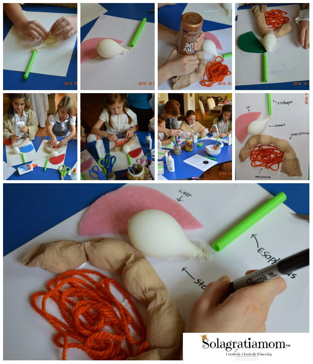 Digestive System Project Ideas For Kids