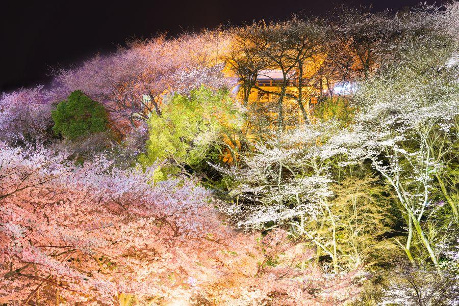 Sakura Castle by Takk B on 500px