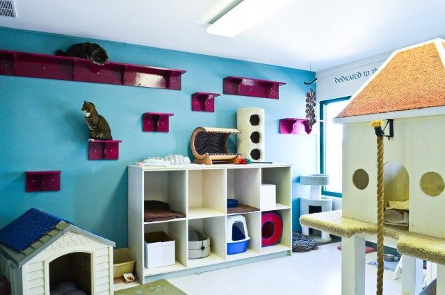 Cat Room Love The Kitty Litter Bins In The Dog House Idea Cat Play Rooms Cat Room Animal Room