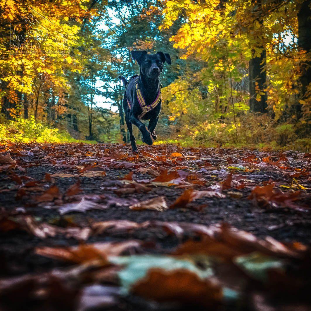 Herbst weiter Fotos hier: https://www.dog-smilla.de/fotos-okt-2014/