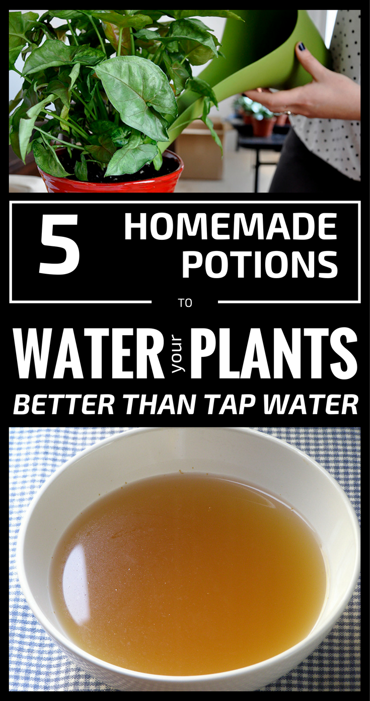 5 Homemade Potions To Water Your Plants Better Tha