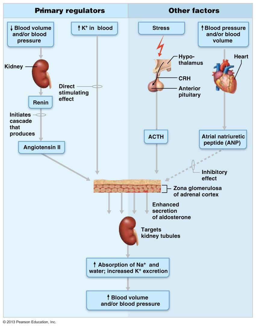 steroid-induced diabetes a clinical and molecular approach to understanding and treatment