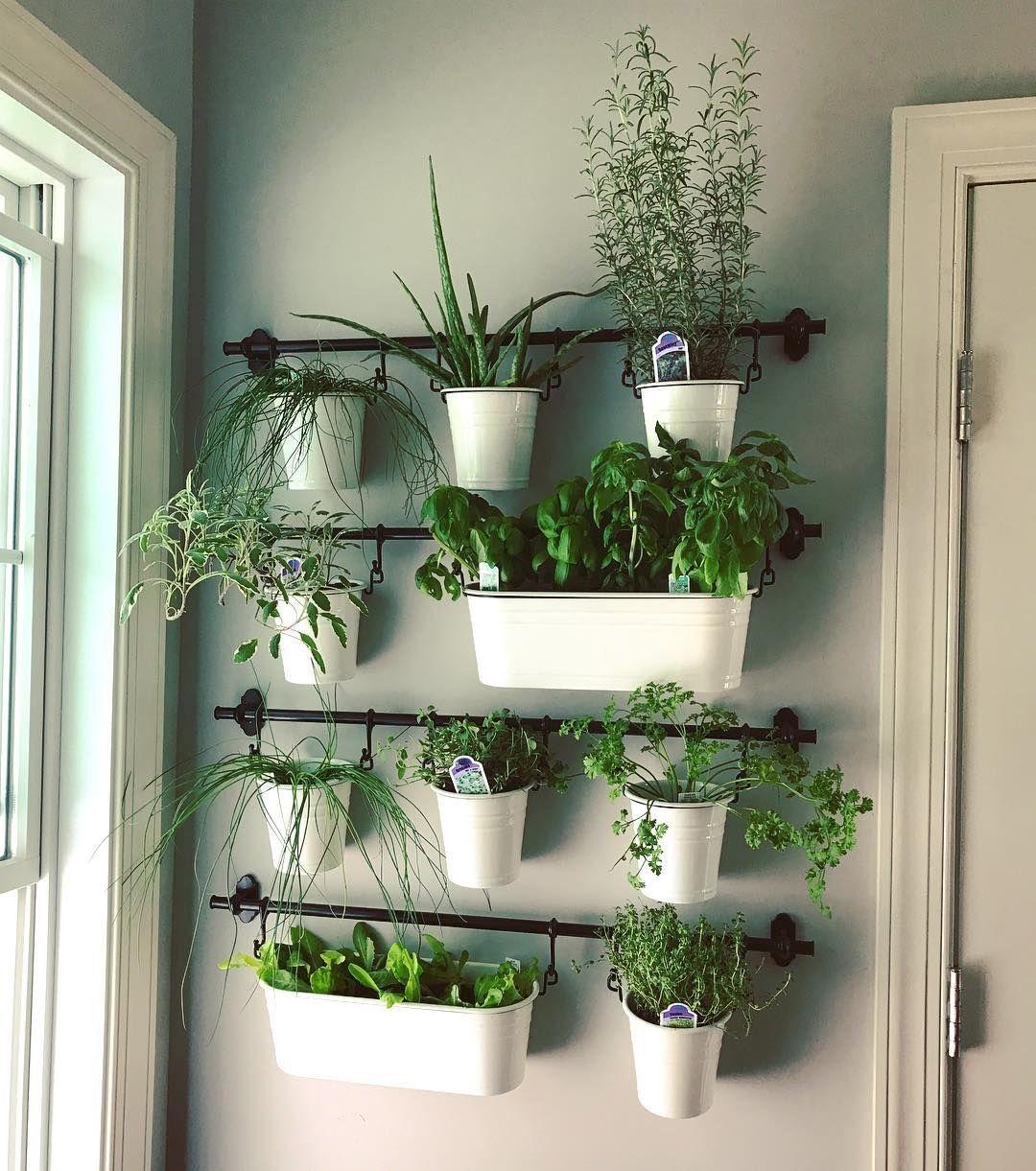 indoor herb gardens on instagram for the kitchen well good 1003 in 2020 indoor herb garden on outdoor kitchen herb garden id=69194