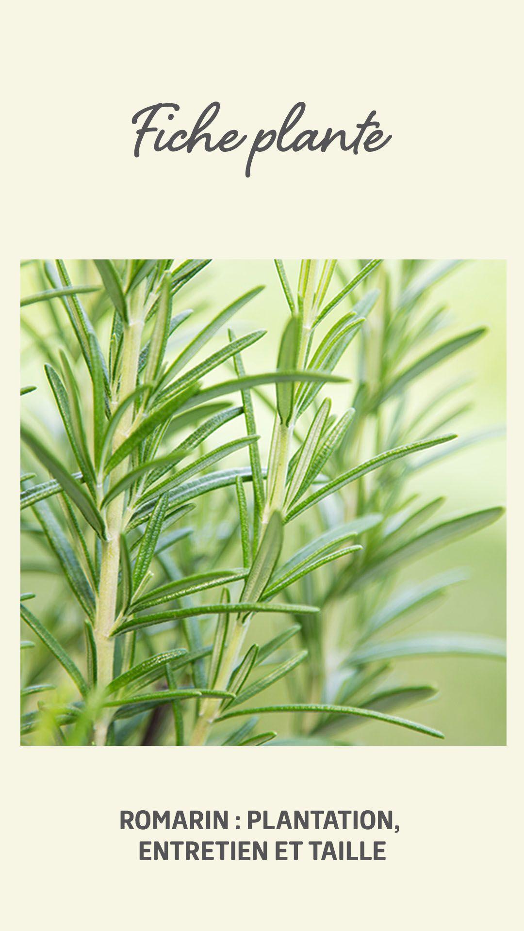 Planter Dans Un Talus Épinglé sur potager et verger