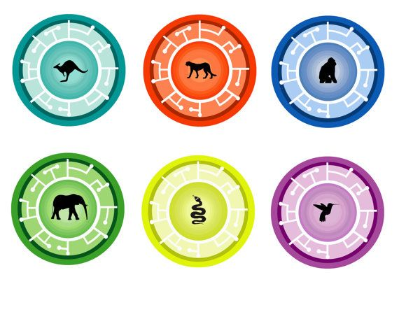 graphic relating to Creature Power Discs Printable named creature energy discs Wild Kratts Creature Electrical power Discs