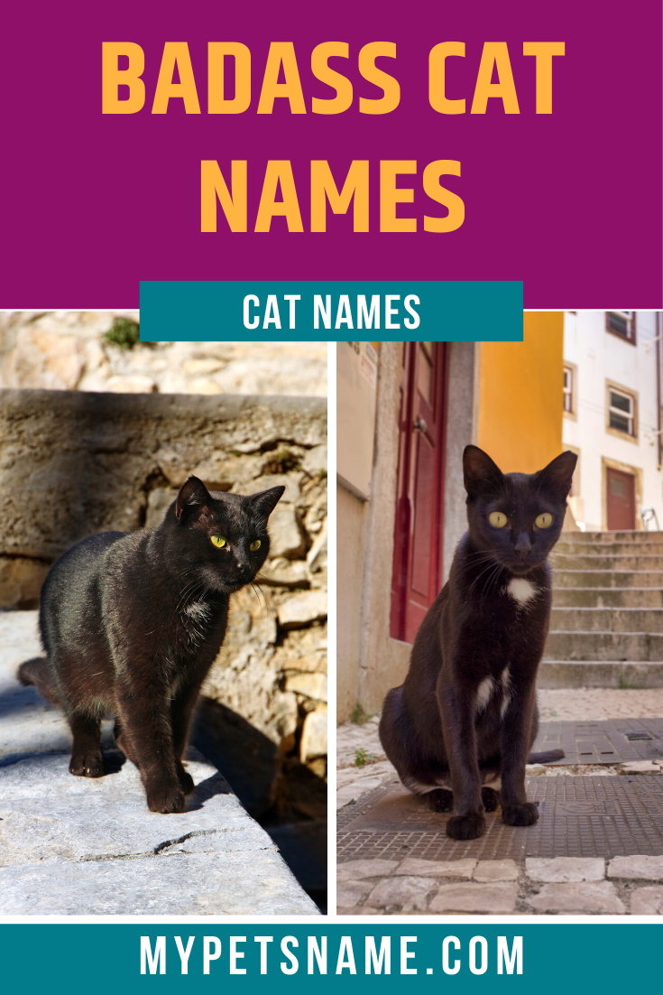 Badass Cat Names In 2020 Badass Cat Names Cats Cat Names