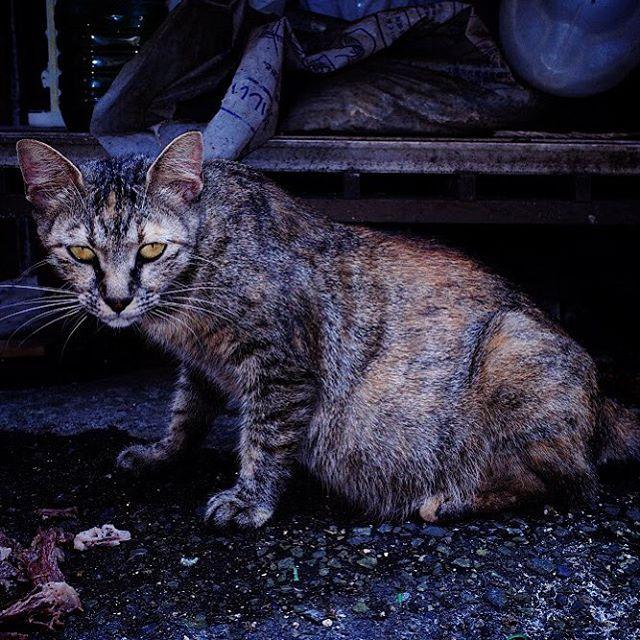 """@shoji_ogawa_unlimited's photo: """"#新世界#shinsekai #cat"""""""
