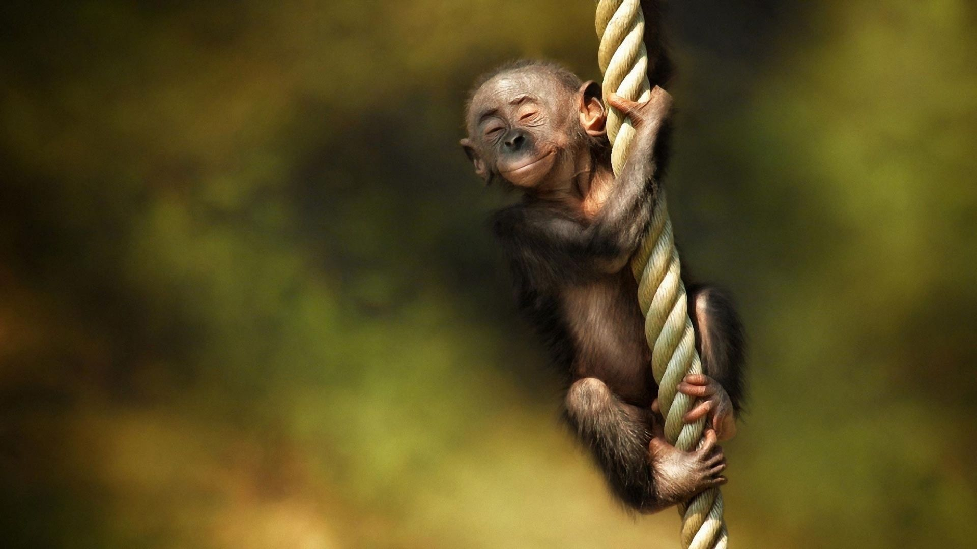 full hd p monkey wallpapers hd desktop backgrounds x