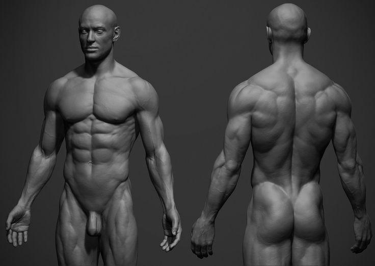 Rsultat De Recherche Dimages Pour Fat Man Anatomy Anatomy