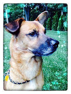 ADOPTED!!! BANDIT...Sharon Center, OH - German Shepherd Dog Mix. Meet Bandit, a dog for adoption. http://www.adoptapet.com/pet/11705529-sharon-center-ohio-german-shepherd-dog-mix