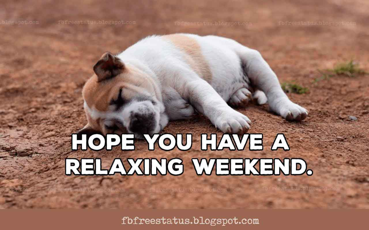Funny Happy Weekend Quotes With Images Pictures Hunde Reiseziele