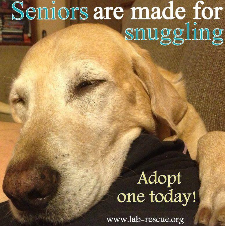 Mature pet adoptions