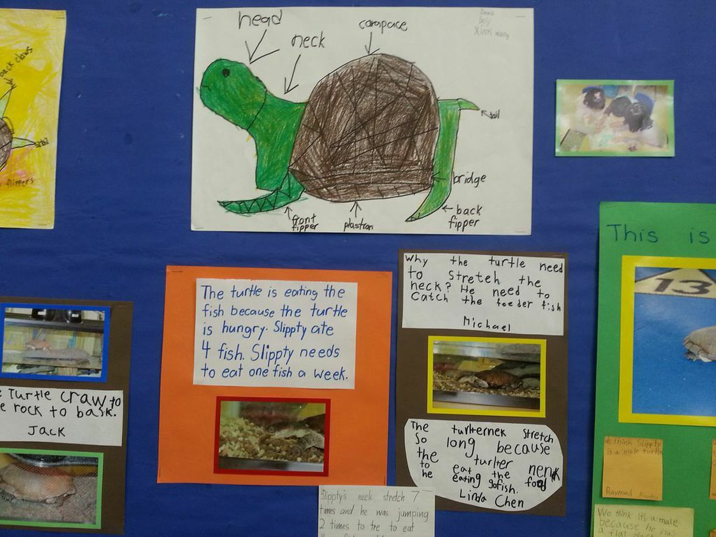 A Surprising First Grade Pet Project