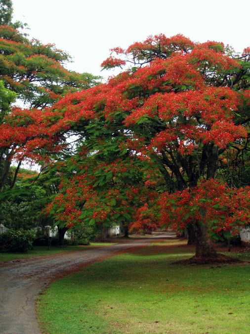 Тюльпановое дерево | Природа, Пейзажи, Фотографии
