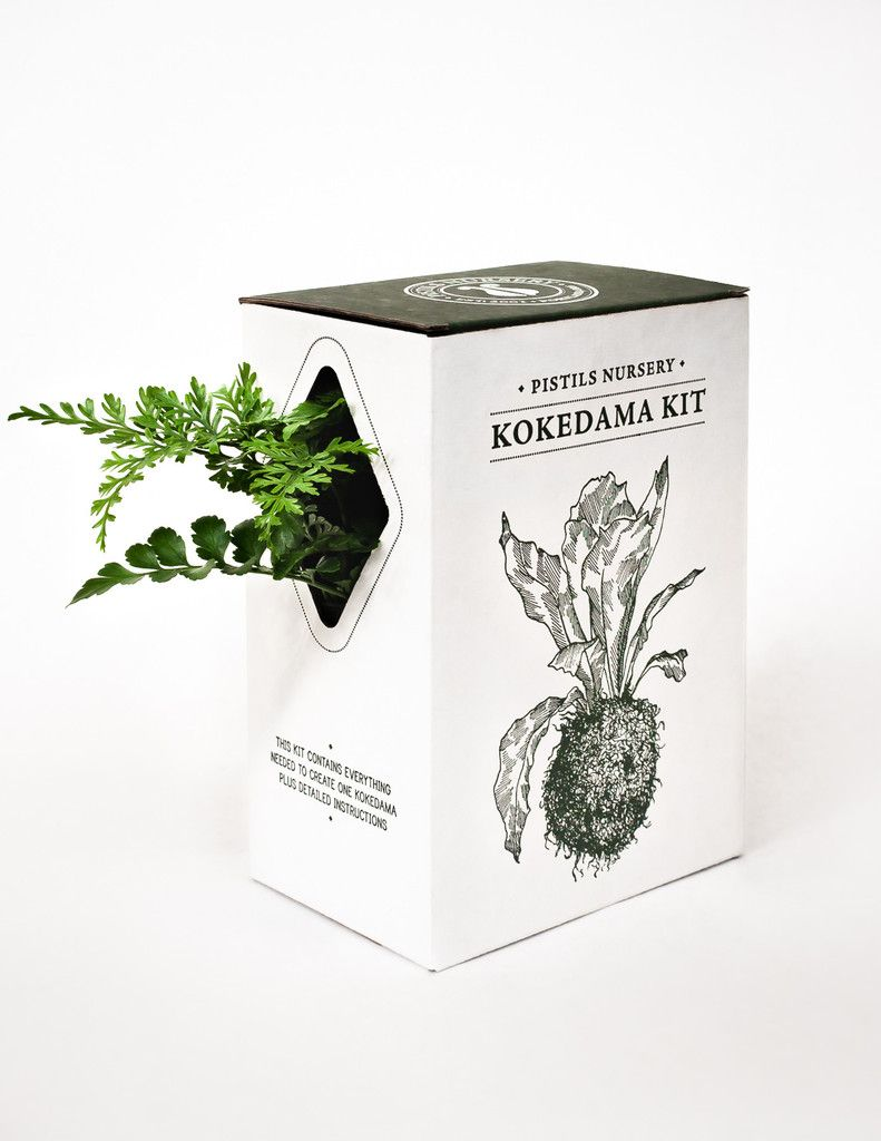 """Our Kokedama kit was designed and created entirely in-house, down to the illustrations, which were done here in Portland by a local artist. It contains everything you need to make your own Kokedama (""""String Garden"""") at home, including the plant!"""