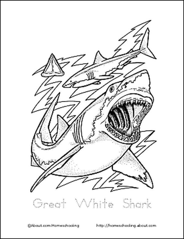 Learn About Sharks With Free Printables Shark Coloring Page