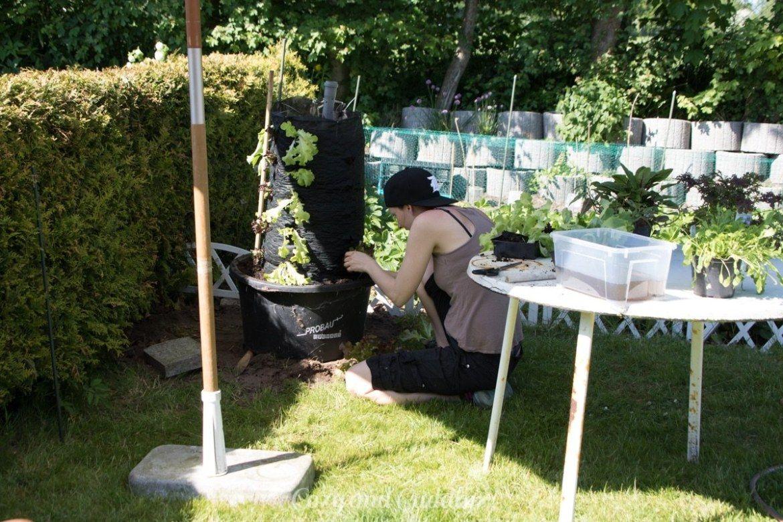 Schnecken Naturlich Bekampfen Salat Aus Dem Garten Im Salat Turm Anleitung Gemuse Anpflanzen Garten Salat Anpflanzen