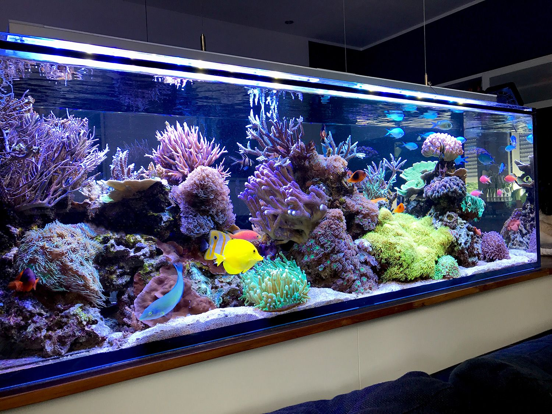 Hallo leute ich m chte euch mein neues becken vorstellen for Salzwasser aquarium fische