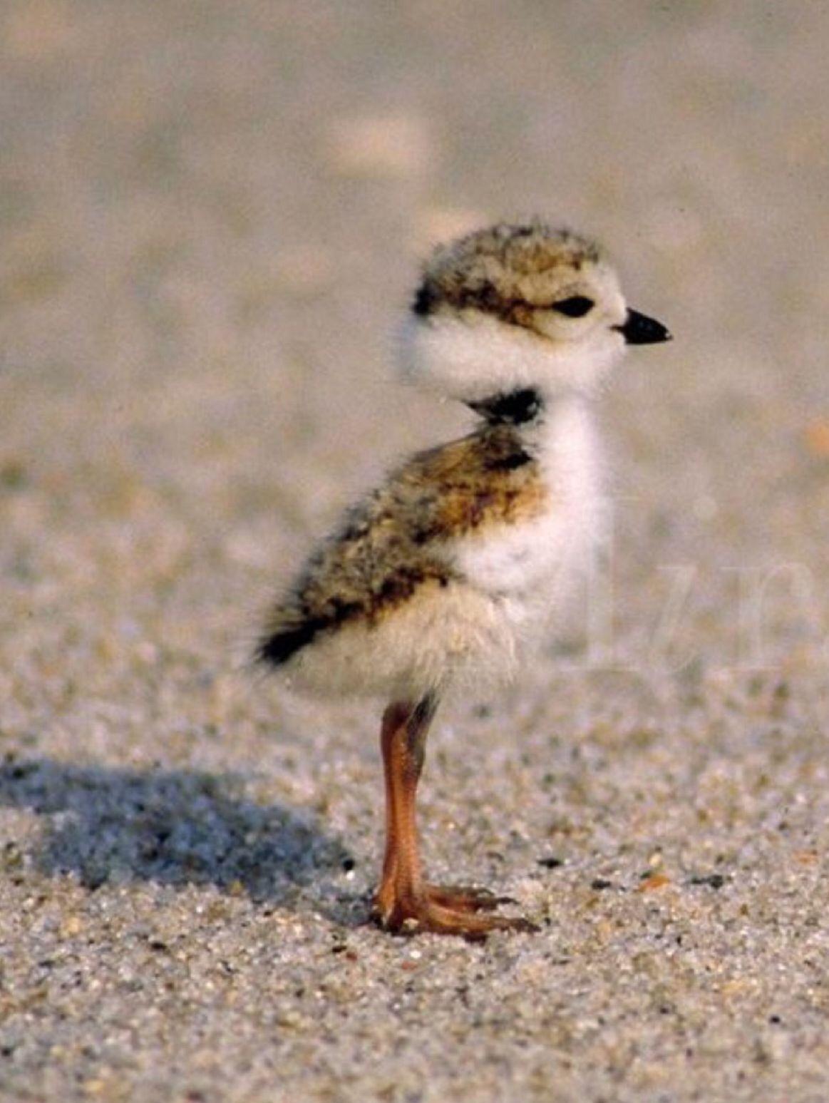 Pin By Nikki Rensje On Nature Animals Cute Animals Cute Baby Animals