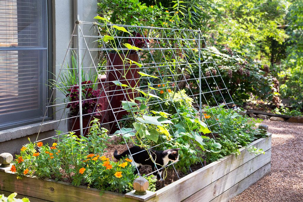 Marvelous How To Use Cattle Panels For Gardening (Cattle Panel A Frame Trellis)