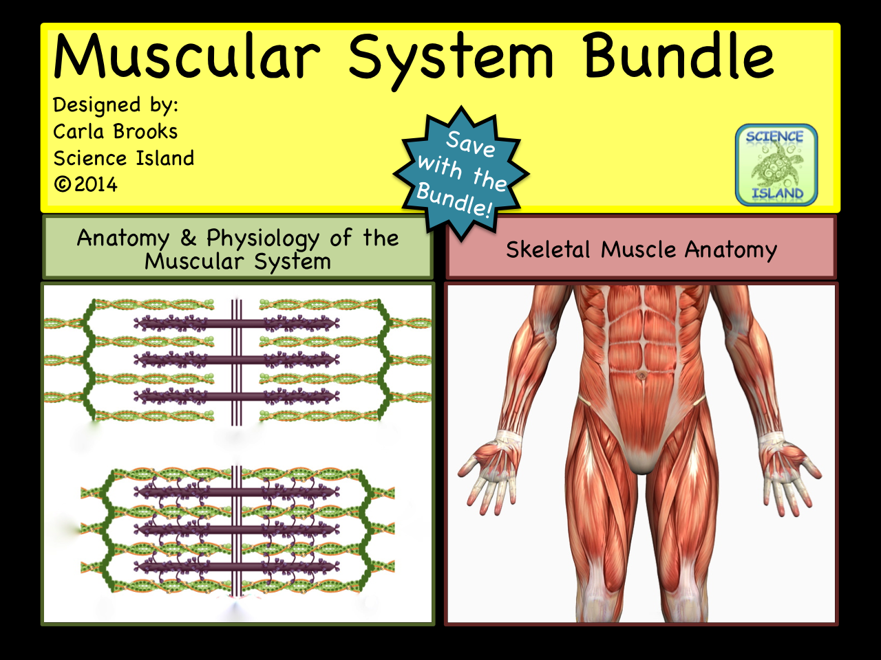 muscular system bundle powerpoint and notes anatomy u0026 physiology