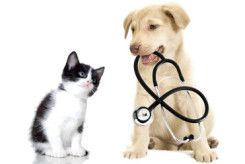 Dog Blog All Your Dog Info In One Place Support Animal Pet Insurance For Dogs Animal Hospital