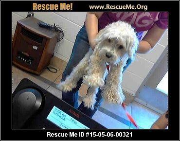North Carolina Maltese Rescue Adoptions Rescueme Org