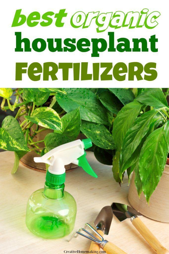 Best Organic Houseplant Fertilizers House Plants 400 x 300