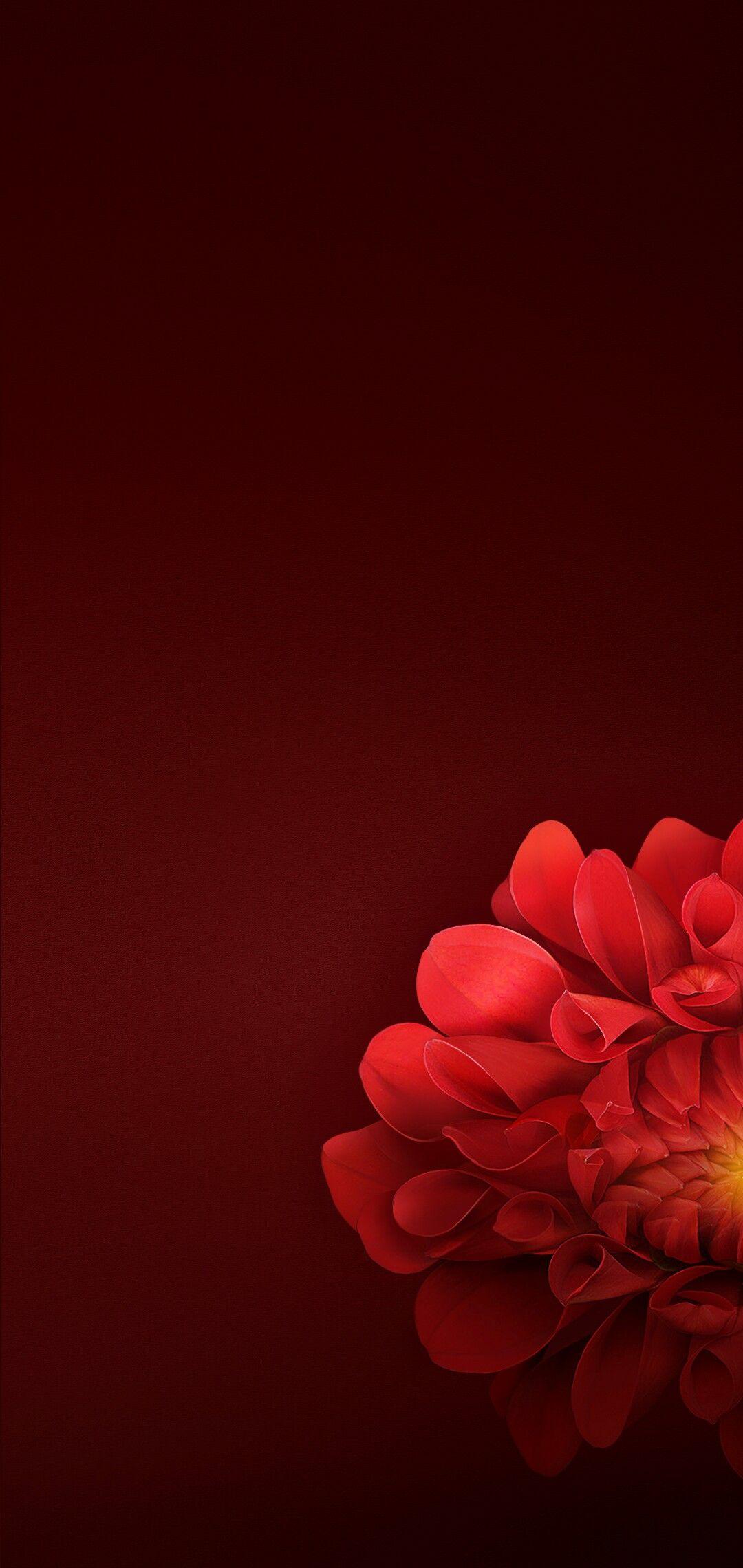 Pin On Flowers Flower wallpaper hd mobile