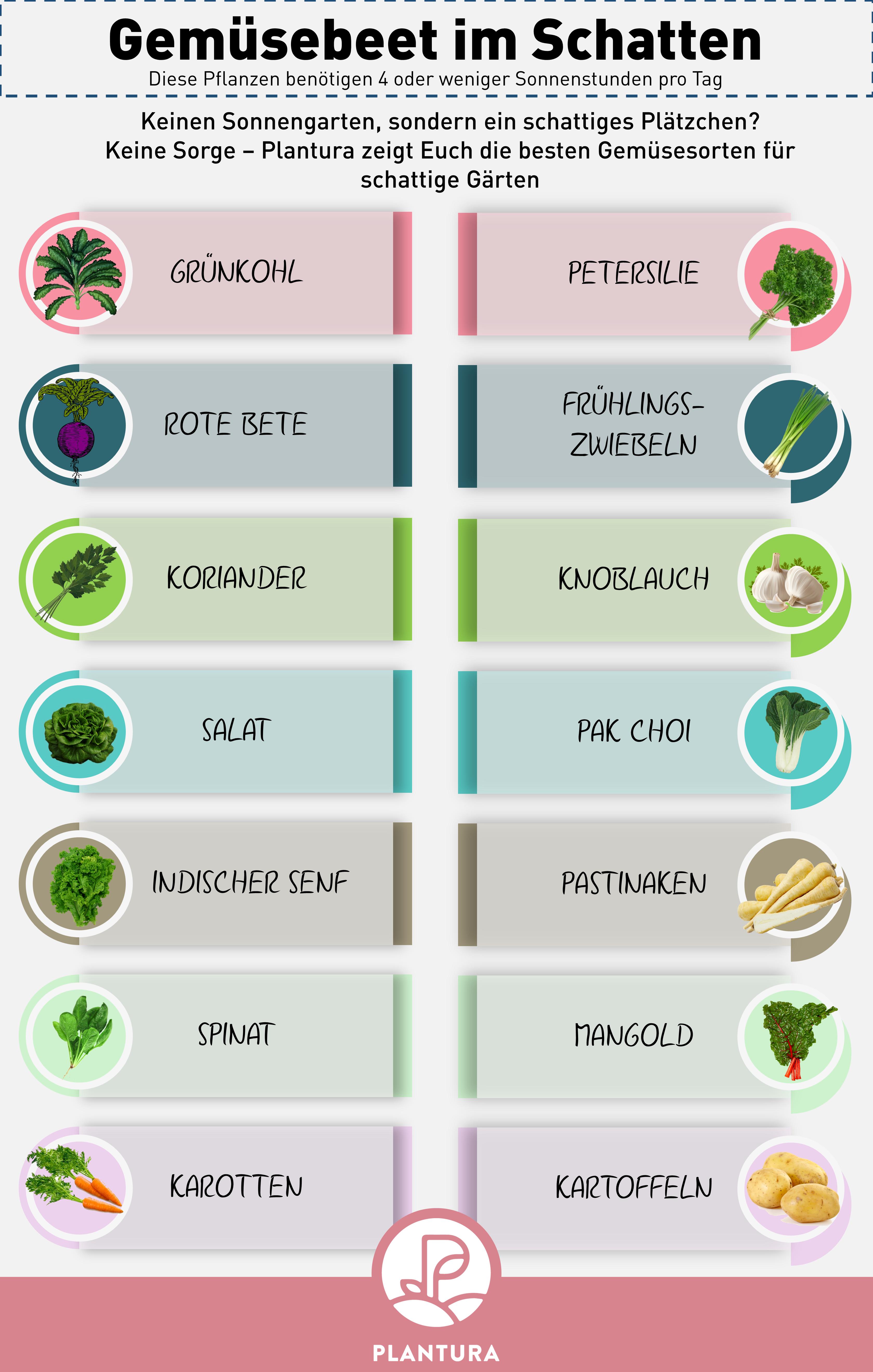 Dieses Gemüse ist perfekt für den Anbau im Schatten geeignet!