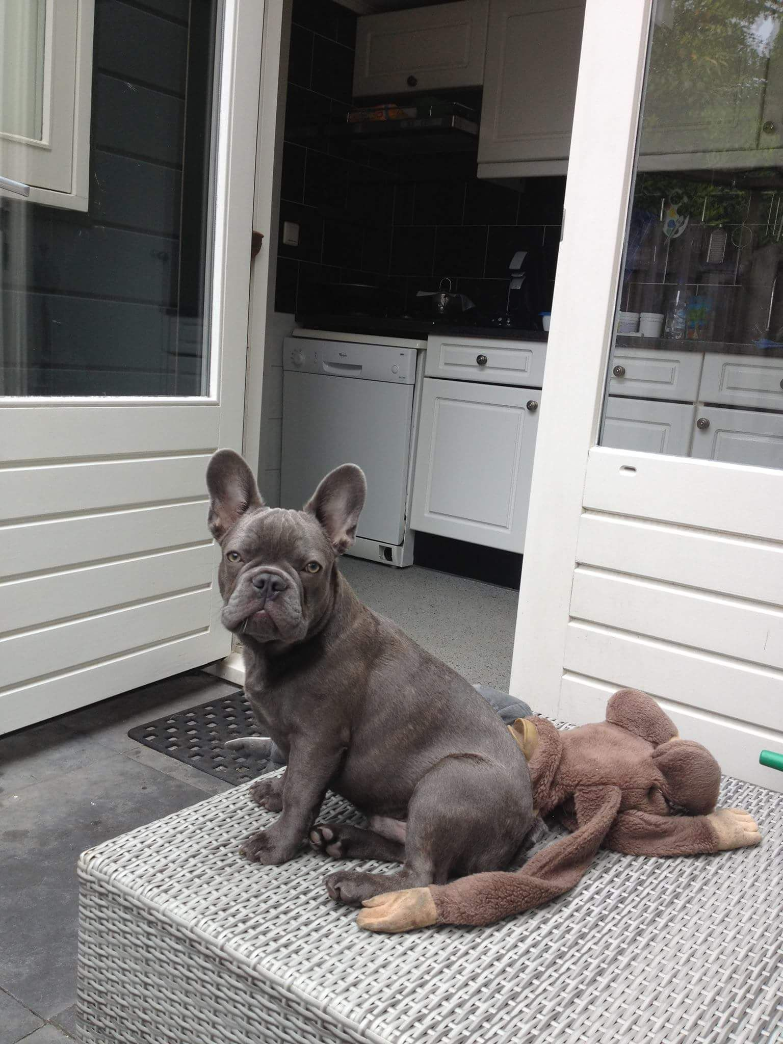 Pin By Tina Varney Gibson On Dogs And Puppies French Bulldog
