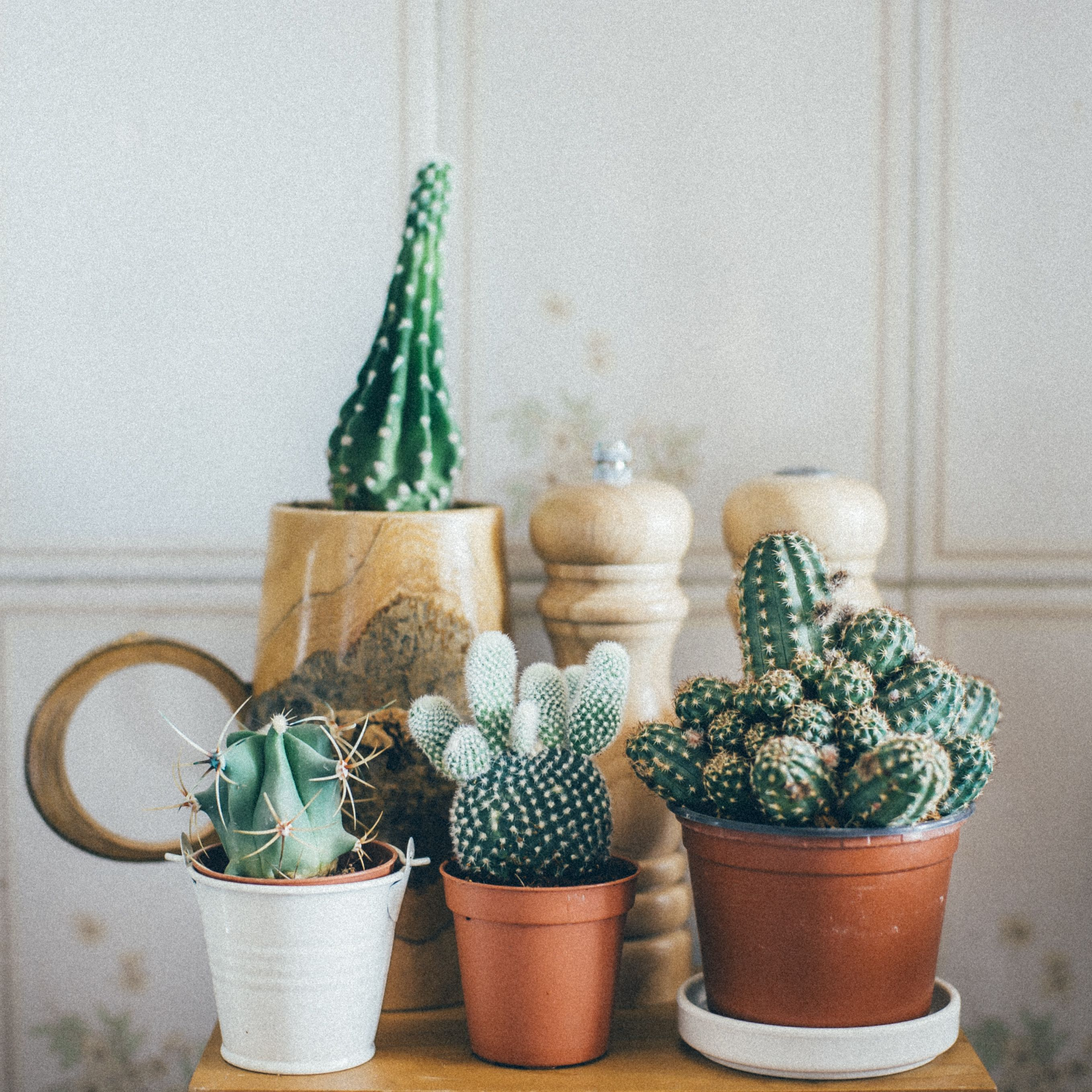Indoor Plants Have Many Benefits Such As Helping You Breathe Since They Release Oxygen They Purify The A Cactus Facts Small Cactus Plants Succulent Fertilizer