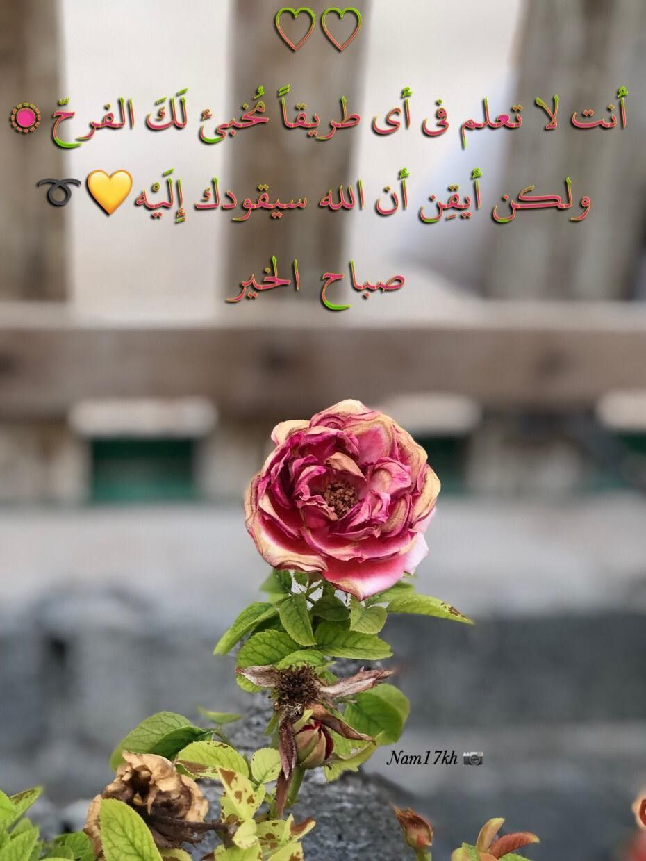 أسأل الله العظيم الدائم بلا أمد العزيز بلا سند الواحد الأحد الفرد الصمد الذي لم يلد ولم يولد ولم يكن له كفوا احد أن ينير وجوهكم Flowers Plants Rose