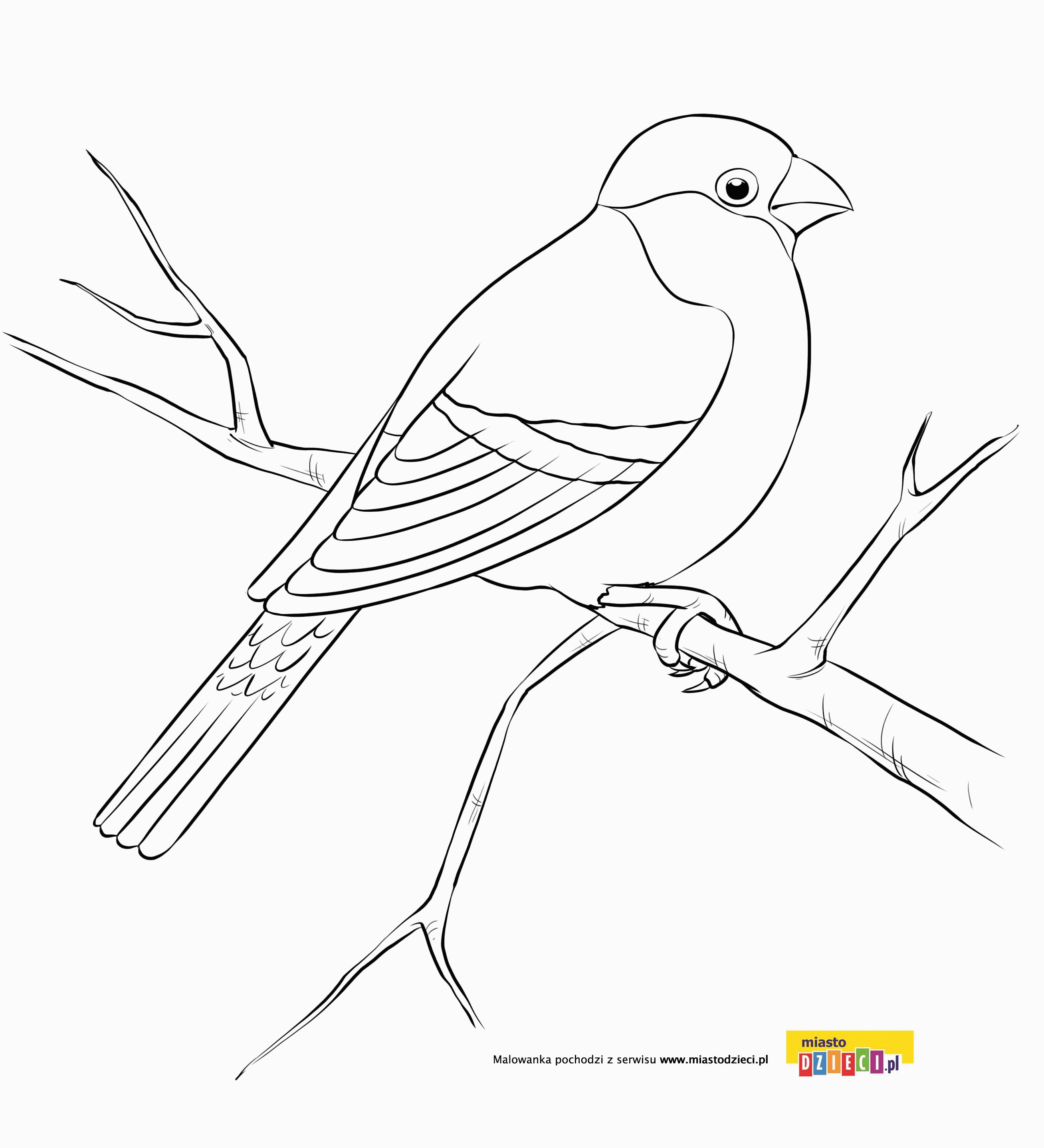 Gil Kolorowanki Ptasie Kolorowanki Ptaki Malowanki Dla Dzieci Do Drukowania Bird Drawings Embroidery Drawings