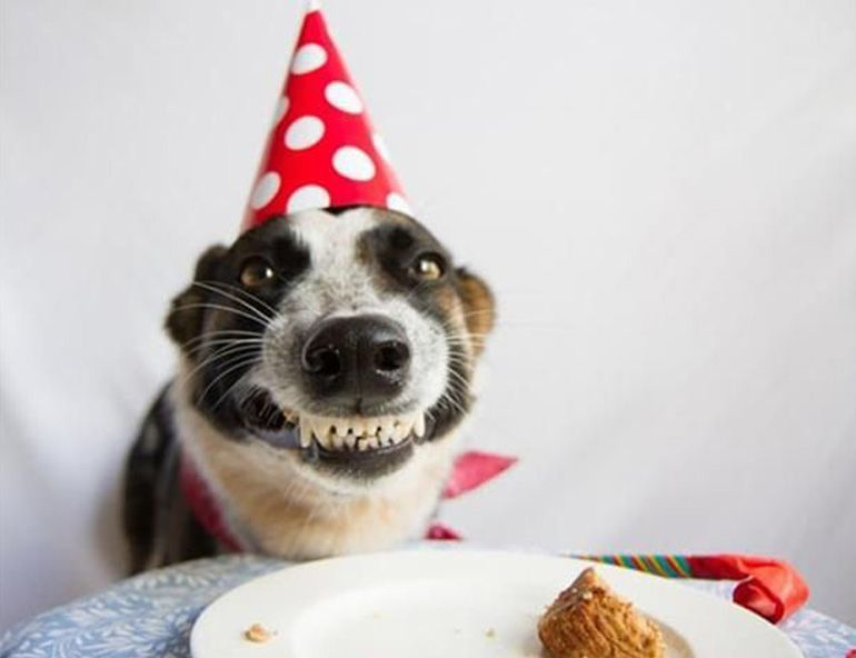11 Cats And Dogs Who Love To Cheese Dog Birthday Dog Cakes